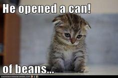 Awwww! Poor sad kitty!   Funny Stuff   Pinterest   Sad Kitty ...