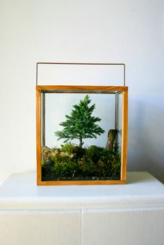 Definitely going to make it a priority to someday get a Miniature Forest terrarium for my home. An evergreen bonsai, mossy floor and log make this beautiful PNW terrarium! Cactus E Suculentas, Juniper Bonsai, Forest Plants, Bonsai Styles, Decoration Plante, Paludarium, Vivarium, Garden Terrarium, Mini Terrarium
