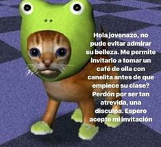 No tengo vida kok kok solo veo memes kok kok me quiero morir kok kok. Memes Estúpidos, Cute Memes, Stupid Memes, Funny Memes, Reaction Pictures, Funny Pictures, Memes Lindos, Frases Tumblr, Spanish Memes