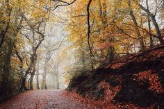 Autumn in Telford, England | Fall foliage in the UK #Nature #Photography