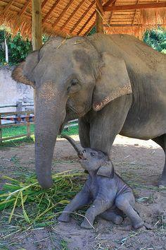 Mama with her baby  #animals #babyanimals #elephants