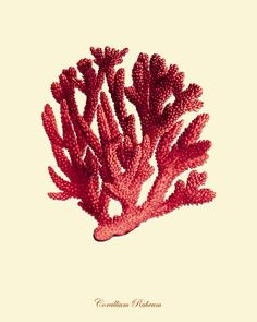 Red Sea Coral art print Vintage sea art print от VictorianWallArt