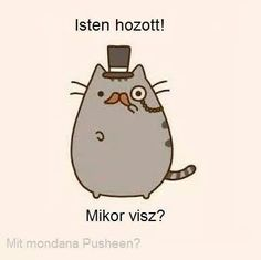 . Kawaii 365, Pusheen Cat, Wholesome Memes, Funny Moments, Really Funny, Charlie Brown, Haha, Funny Pictures, Jokes