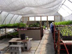 Aluminet shade cloth is a high-quality, reflective shade cloth that is perfect for greenhouses and vegetables, as well as creating shade for you and your friends. Greenhouse Shade Cloth, Greenhouse Cover, Best Greenhouse, Greenhouse Growing, Greenhouse Plans, Greenhouse Supplies, Garden Supplies, Plant Watering System, Bird Netting