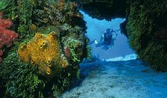 Been There, Done That - Scuba Diving in Cozumel, Mexico
