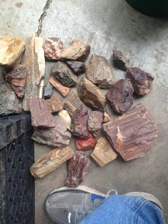 Petrified Wood from Hampton Butte in Oregon. Fossilized Wood, Petrified Wood, Cascadia Subduction Zone, Pet Rocks, Rocks And Minerals, The Hamptons, Oregon, Gemstones, Earth Science