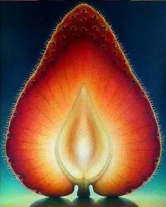 Beautiful geometry in nature! Natural News.com