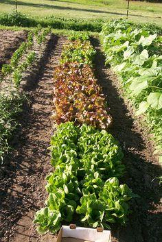 LocalHarvest - Community Supported Agriculture (CSA)