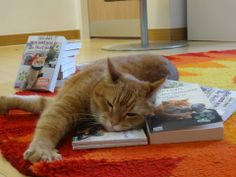 Exhausting life of a celebrity  - from FB page James Bowen & Street Cat Bob