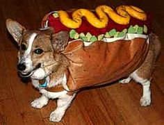 Aww! A hot dog! I just love corgis, don't you? And dogs in costume absolutely make me giddy. Who said a CPA is stodgy? This CPA likes what she sees. The dog also looks pretty cool with being in the costume. Susan Marlowe continues to OOO and AAAH over this!