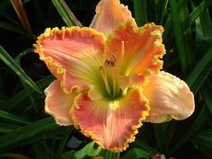 Jacqueline Kennedy Day Lilly