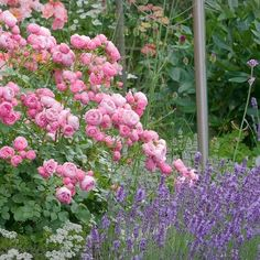 Rose Companion Plants, Hydrangea Care, Walled Garden, Garden Architecture, Flower Pictures, Disney Diy, Flower Decorations, Beautiful Gardens, Container Gardening