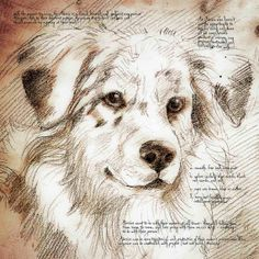leonardo da vinci drawings of animals - Google Search