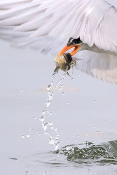 The Catch  Photo by hemant kumar -- National Geographic Your Shot