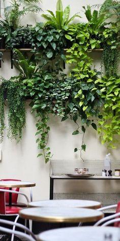 #plantasdeinterior