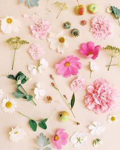 "heather-page: "" Garden treasures circa August 2017 on ze film ✨ (at Winnipeg, Manitoba) "" Rose Like Flowers, Beautiful Flowers Photos, Beautiful Nature Wallpaper, Amazing Flowers, Floral Flowers, Sassy Wallpaper, Flower Phone Wallpaper, Nature Illustration, Scenery Wallpaper"