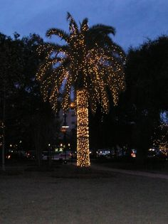 James Island Lights Custom Holiday Festival Of Lights At James Island County Parka Must See Inspiration Design
