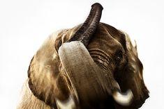 Breathtaking Close-Up Portraits of Wild Animals - My Modern Metropolis