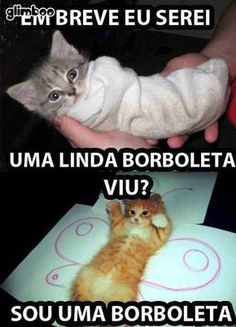 Read Gatos from the story Memes de tudo by with reads. I Love Cats, Cute Cats, Funny Cats, Animals And Pets, Funny Animals, Cute Animals, Gato Anime, Matou, Memes Status