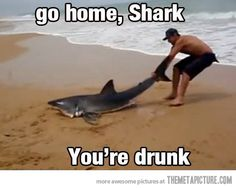 Dammit shark, keep it together…