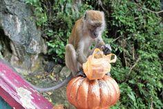 Travel, Nature, Wood, Monkey, Jungle, Primate #travel, #nature, #wood, #monkey, #jungle, #primate