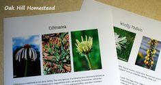 DIY Herb Field Guide