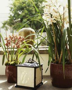 Orchids - Dominique Vorillon / Getty Images