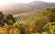 What to Do and See in Napa Valley
