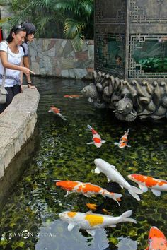 I love the whimsical fish carvings. Healthy koi fish, clear pond water!