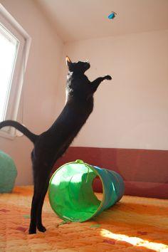 One tall black cat!