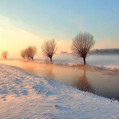 Winter Wonder Willowland