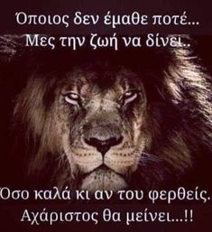 Greek Quotes, Wisdom, Good Things, Words, Horse