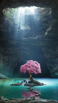 Pink tree blossom cave lake nature 480800 wallpaper The post Pink tree blossom cave lake nature 480800 wallpaper appeared first on Hintergrundbilder. Beautiful Nature Wallpaper, Beautiful Landscapes, Amazing Wallpaper, Natur Wallpaper, Tree Wallpaper, World Wallpaper, Wallpaper Backgrounds, 480x800 Wallpaper, Pink Trees