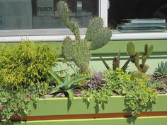 Cactus & Succulents for a landscaping business