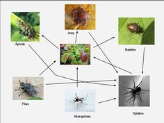 Venus flytrap food web learning and education pinterest food venus flytrap food web learning and education pinterest food webs and venus flytrap ccuart Choice Image