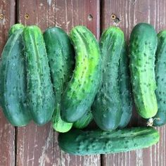 Summer's bounty rolling in with plenty of cucumbers to share in community for pickling, salads, and simply as a super crisp snack!