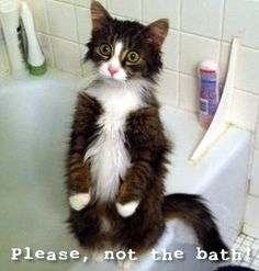 Memes to make fun of the cold - Although at Christmas the cold was not so stained, the net surprised us what it is doing in recent - Funny Animal Memes, Cute Funny Animals, Animal Quotes, Cat Memes, Funny Cute, Funny Memes, Gato Gif, Lol, Spanish Memes