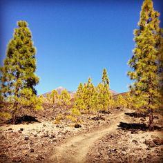 National Park Cañadas del Teide / Parque Nacional Cañadas del Teide by @Tenerifesk