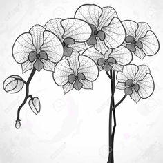 Paling Populer 10 Lukisan Bunga Orkid Simple Bari Gambar