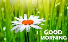162 Lovely Good Morning Wishes With Flowers Gud Morning Pics, Love Good Morning Quotes, Cute Good Morning Images, Morning Quotes For Friends, Good Morning Images Flowers, Latest Good Morning, Good Morning Picture, Good Morning Messages, Morning Pictures