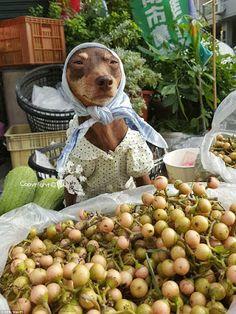 """""""Pásele Güerita ¿qué va a llevar?"""" Ella es Xiao Pi, la perrita que ayuda a su dueño a vender frutas y verduras. Nota completa: http://bit.ly/29p7DLw"""