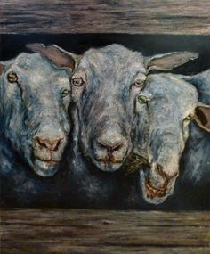 Three sheeps