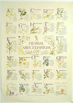 'Herbal Abecedarium' Herb Poster, Kitchen Witch, Hedge Witch, Herbalism in…