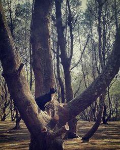 andri resna @andriresna Instagram photos | Websta (Webstagram)