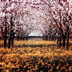 Spring by ~f-f-w-d