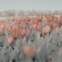 Ideas For Flowers Aesthetic Soft Peach Aesthetic, Aesthetic Colors, Aesthetic Images, Aesthetic Photo, Aesthetic Wallpapers, Nature Architecture, Artsy, Bloom, Inspiration