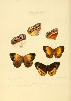 1856 - Illustrations of new species of exotic butterflies : selected chiefly from the collections of W. Wilson Saunders and William C. Hewitson