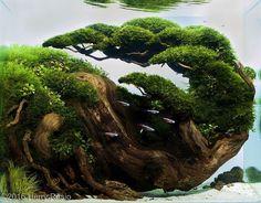 Such an awesome scape ------------------------------------------------ #aquascape #aquarium #aqua #aquascaping #wood #grass #tetra #fish…