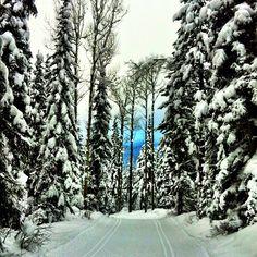 Stunning day at Dawn Mountain! #kickinghorse #goldenbc #livegoldenbc #winter #ski