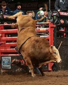 .pbr Bull Riding, Horse Riding, Cow Cat, Professional Bull Riders, Mechanical Bull, Rodeo Time, Bucking Bulls, Western Photo, Man Beast